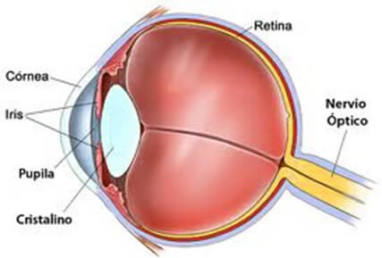 En la imagen observamos un dibujo esquematizando e identificando las partes más importantes de un ojo humano.