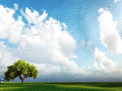 Los floaters, moscas volantes o miodesopsias son en ocasiones el primer síntoma de un desprendimiento de retina.