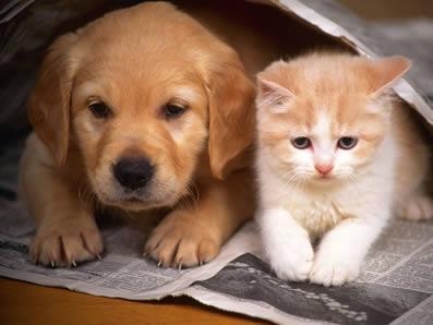 Algunas personas son alérgicas a mascotas como gatos y perros.